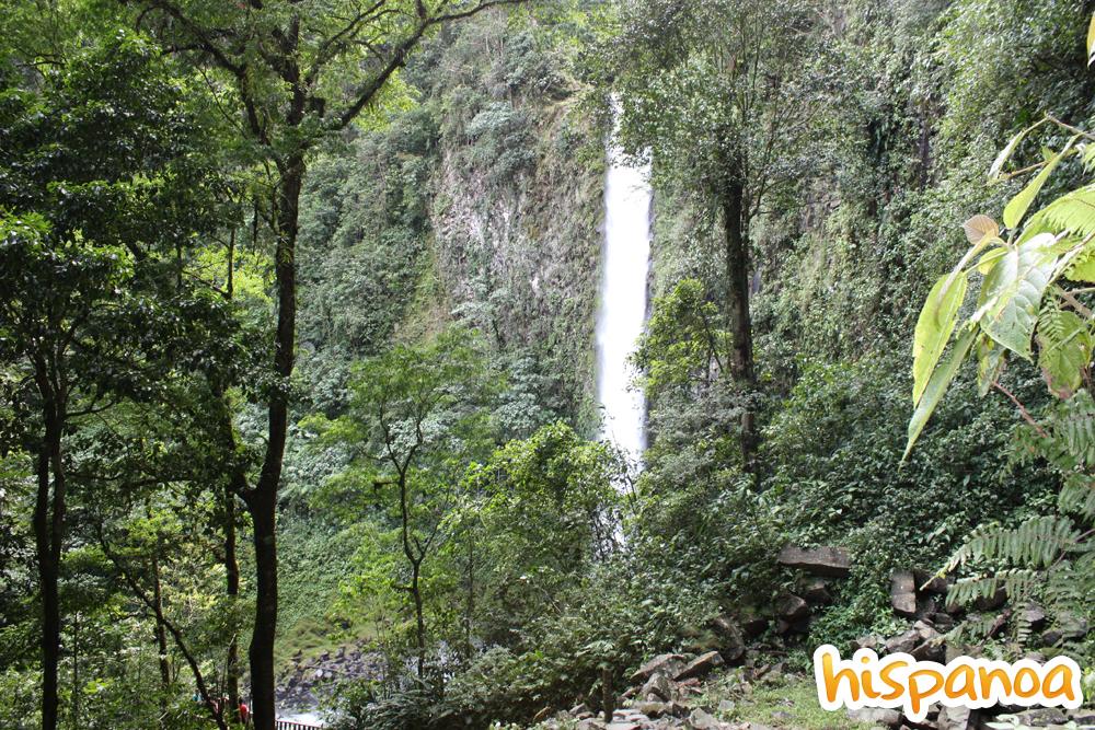 Forêt Costa Rica