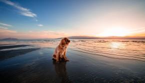 Chien sur la plage au lever du soleil